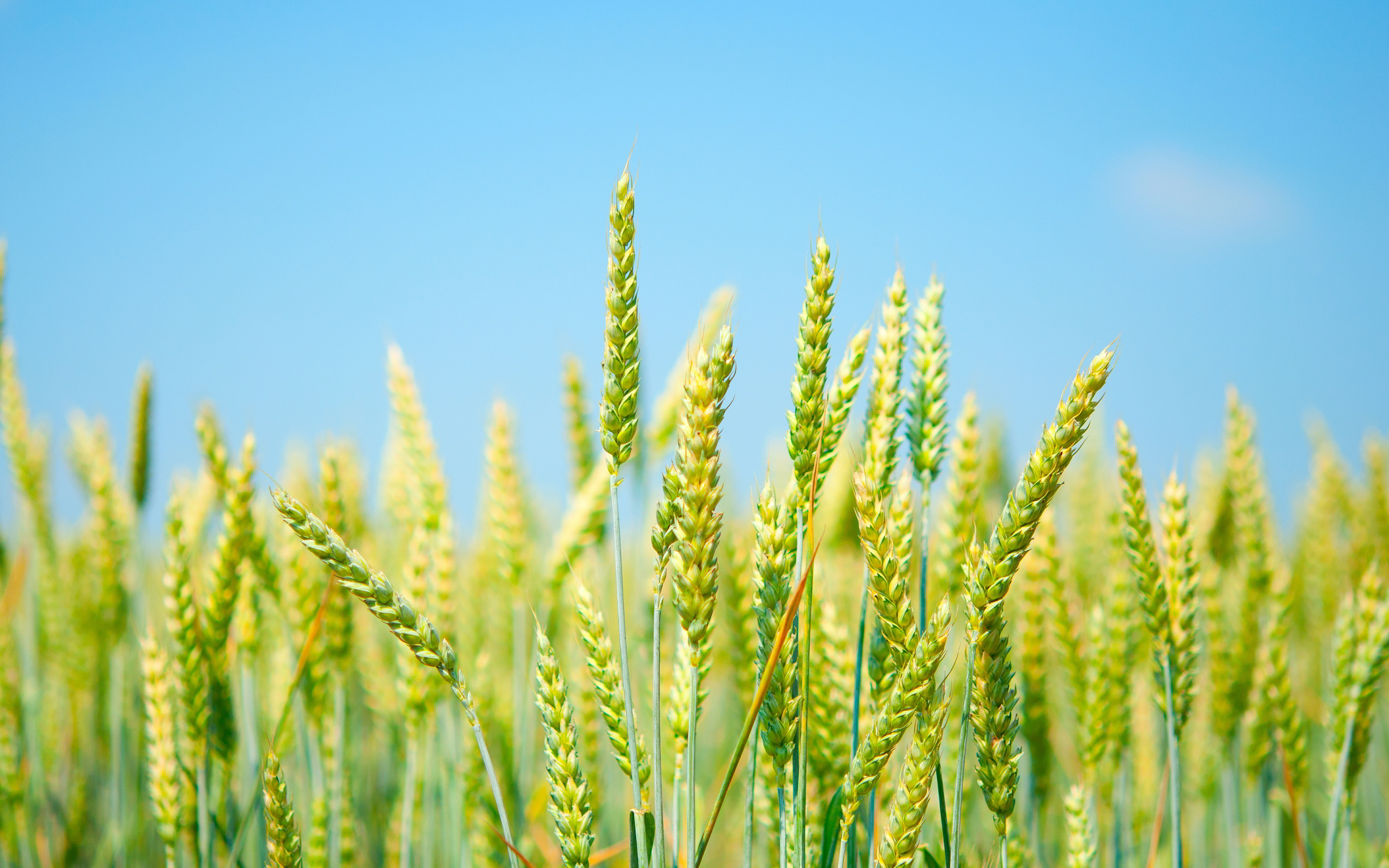 Oman prepares new agricultural strategies for Vision 2040